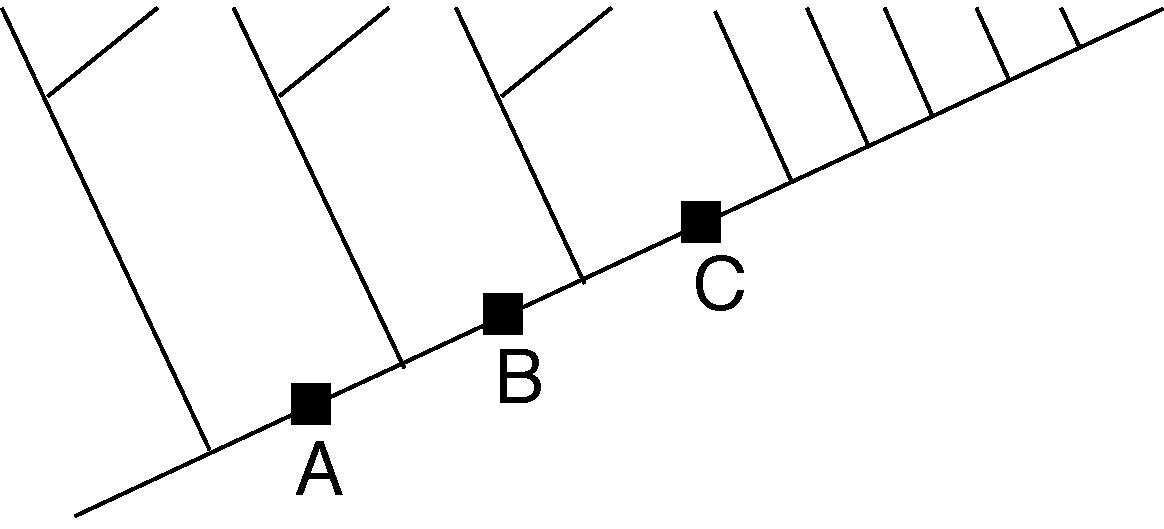 dichotomous key template
